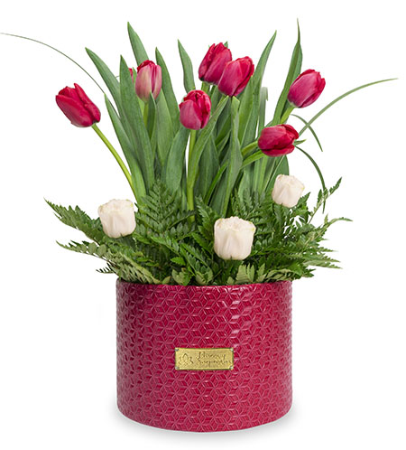 Box de 12 Tulipanes